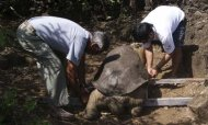 The Last Of His Kind: Lonesome George Dies