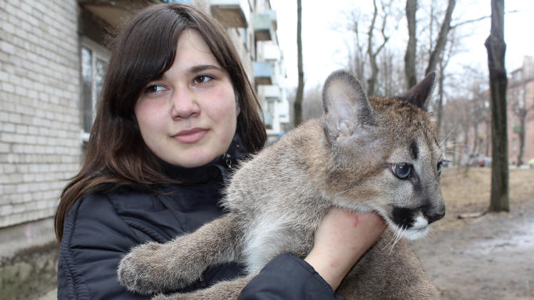Rasa Veliute holds a four- month- old  puma who lives in her apartment  in Klaipeda, Lithuania, Friday, April 12, 2013.  23 year old Veliute, a volunteer at a private zoo in Klaipeda seaport says she took three cubs home six months ago when their mother refused to care for them. Veliute said Friday the pumas have grown fast and will have to be returned to the zoo this summer.  (AP Photo/ Ausra Pilaitiene)