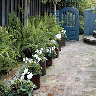 A border in pots