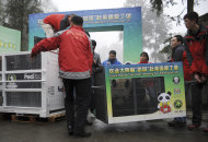 In this photo released by China's Xinhua News Agency, staff carry giant panda Tian Tian in a cage, right, onto a truck in Ya'an, southwest China's Sichuan Province, Saturday, Dec. 3, 2011. As part of a ten-year joint research program, Tian Tian and Yang Guang, the pair of giant pandas, were set off for the Edinburgh Zoo from the Giant Panda Conservation and Research Center in Sichuan here on Saturday, Xinhua said. (AP Photo/Xinhua, Li Qiaoqiao) NO SALES
