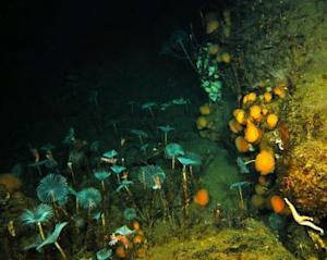 As Antarctic Sea Ice Melts, Seaweed Smothers Seafloor
