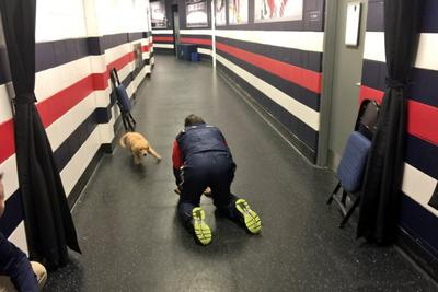 Even John Tortorella can't resist playing with this adorable puppy