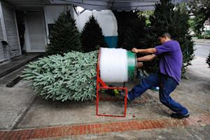 A man packs a Christmas tree for sale in Caracas on…