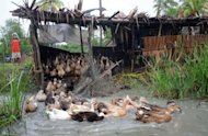 Ducks going for a swim at a farm in a village near the town of Pyapone in the Irrawaddy delta region on July 18. Microfinance initiatives -- which provide small, low-cost loans to the poor -- are seen by experts as a way to help alleviate poverty in one of the world&#39;s least-developed countries