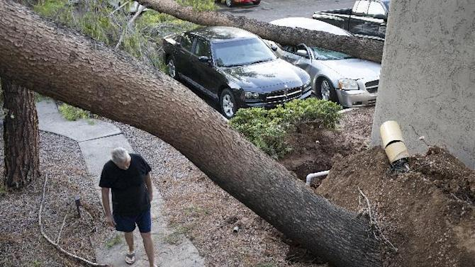 Chuck Bissinger walks under a downed tree, Tuesday, Sept. 1, 2015, at the Daybreak Gardens Apartments in Phoenix. Monsoon storms hit the Phoenix area Monday night and knocked out power to thousands, delayed air travel, and stranded motorists in flash floods and knocking down trees. (Mark Henle/The Arizona Republic via AP)  MARICOPA COUNTY OUT; MAGS OUT; NO SALES; MANDATORY CREDIT
