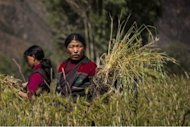 This handout photo, released by www.thegreathimalayatrail.org on September 18, shows Tashi Sangmo Lama, 31, as she works in the fields surrounding her village in the remote Himalayan region of Upper Dolpa, some 500 km from the Nepalese capital Kathmandu