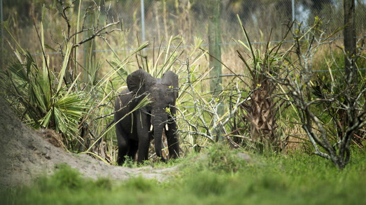 4 elephants call former citrus farm home