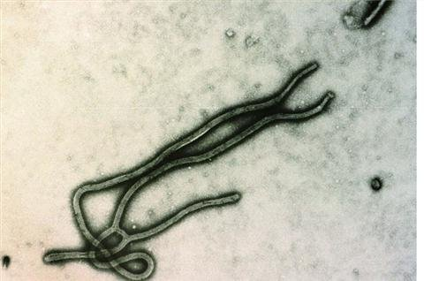 Ebola blamed for Uganda deaths