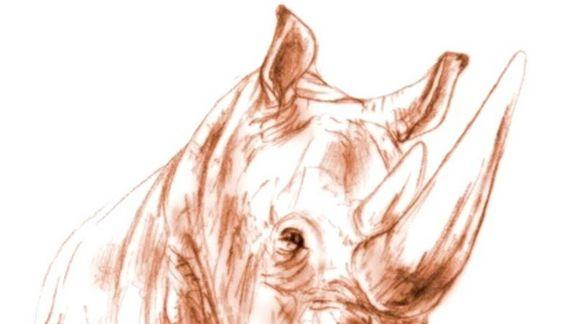 Rhino 'Cooked to Death' 9 Million Years Ago, Fossil Reveals