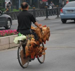 China Reports More Cases of Rare H7N9 Bird Flu