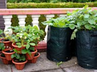 10 Cost Saving Tips for Gardeners