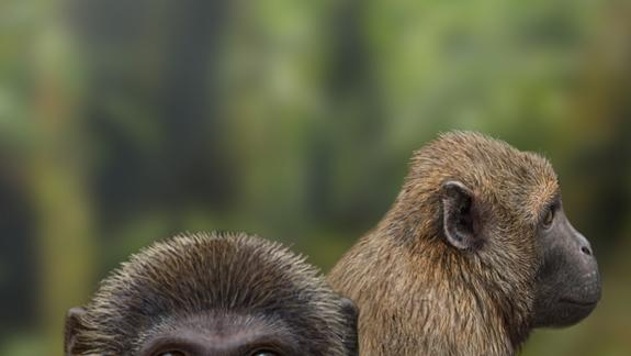 Oldest Fossils Reveal When Apes & Monkeys First Diverged