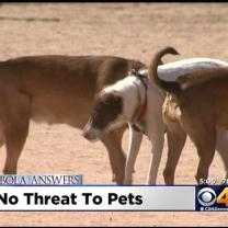 Dr. Dave Hnida: Little To Fear About Pets & Ebola