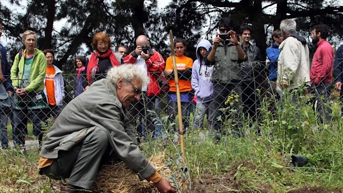 An urban farmer plants an olive tree and local people look on, in the former military camp Karatasiou, in the Northern Greek city of Thessaloniki, on Sunday, April 27, 2014. Volunteer residents are being encouraged to utilize many suburban areas left vacant amidst a drop in real estate prices, to grow crops aimed at helping people hit by the country's financial crisis. (AP Photo/Nikolas Giakoumidis)