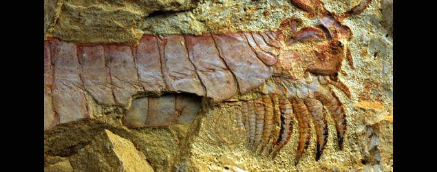 500-million-year-old sea creature unearthed
