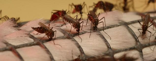 Kematian akibat denggi meningkat 263%