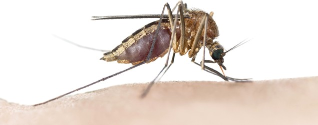 People that mosquitoes are more likely to target (Thinkstock)