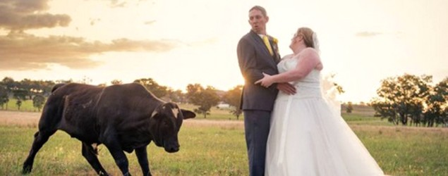 Bull surprises bride and groom at photo shoot (Rachel Deane/Finishing Image Photography)
