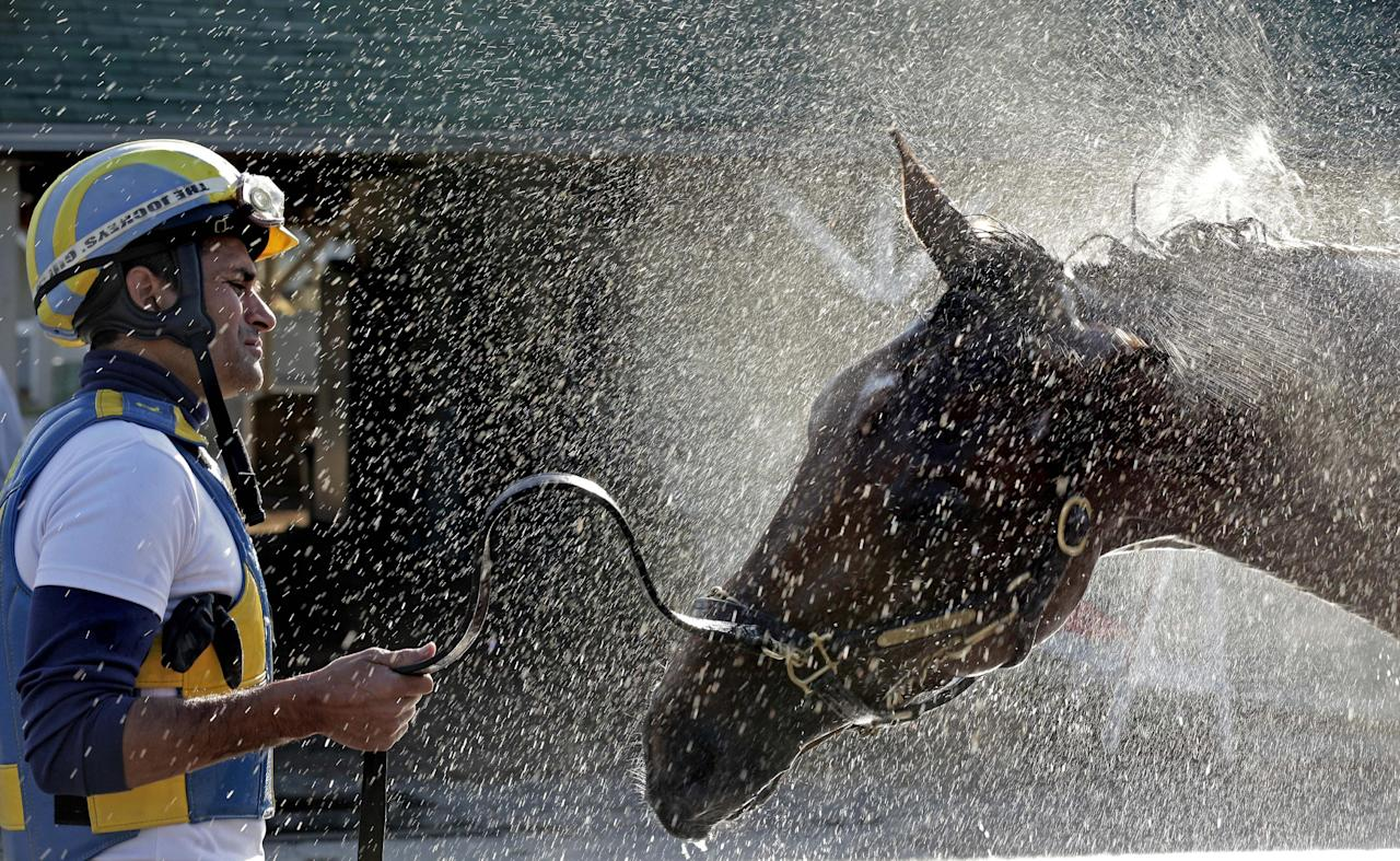 Trainer Rudy Rodriguez watches Kentucky Derby hopeful Vyjack get a bath after a workout at Churchill Downs Tuesday, April 30, 2013, in Louisville, Ky. (AP Photo/Charlie Riedel)