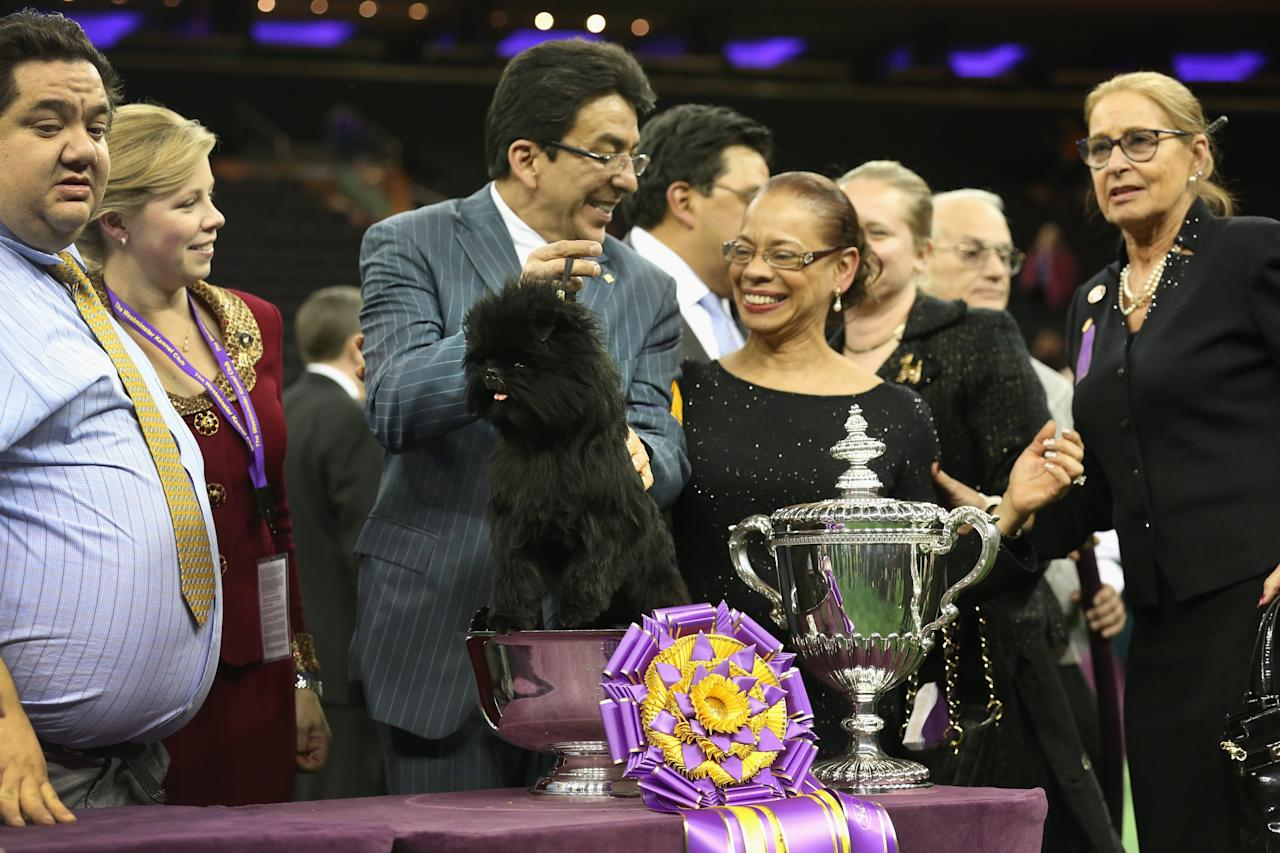 NEW YORK, NY - FEBRUARY 12:  Dog handler Ernesto Lara holds Banana Joe, an Affenpincher, after he won Best in Show at the 137th Westminster Kennel Club Dog Show on February 12, 2013 in New York City.  A total of 2,721 dogs from 187 breeds and varieties competed in the event, hailed by organizers as the second oldest sporting competition in America, after the Kentucky Derby.  (Photo by John Moore/Getty Images)