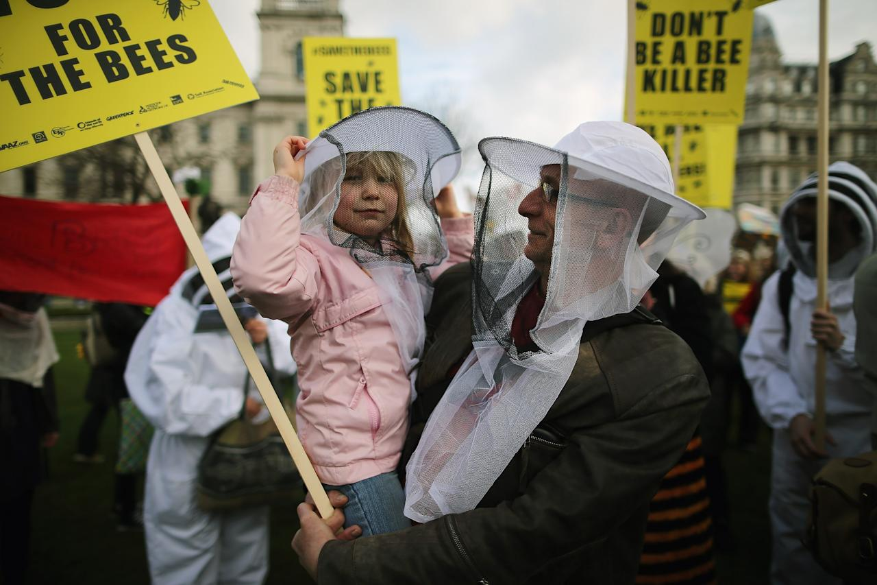 LONDON, ENGLAND - APRIL 26:  Matilda Evans, 5, and her dad join Bee campaigners on Parliament Square on April 26, 2013 in London, England. Over a hundred campaigners including British fashion designers Dame Vivienne Westwood and Katharine Hamnett gathered on Parliament Square, some dressed as beekeepers, to urge British Secretary of State for the Environment Food and Rural Affairs, Owen Paterson, to not block EU proposals to suspend the use of bee killing pesticides.  (Photo by Dan Kitwood/Getty Images)