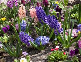 8-ways-to-save-money-on-costly-lawn-care-5-perennials-lg