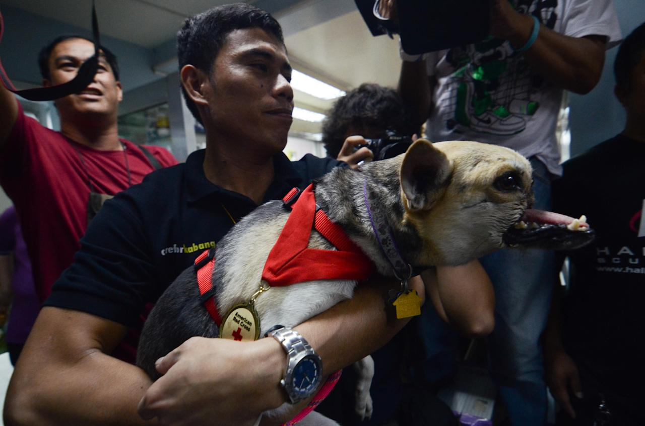 MANILA, PHILIPPINES - JUNE 08:  A veterinarian helper holds Kabang, the hero dog upon arrival at a vet center in Makati City on June 8, 2013 in Manila, Philippines. The female aspin returned to the Philippines after completing eight months of various procedures at University of California (UC) Davis for the loss of its snout when she saved two young girls from the path of an incoming mortocycle in 2011. The heroic dog has since been named as one of the world's top 10 heroic canines for 2012.  (Photo by Dondi Tawatao/Getty Images)