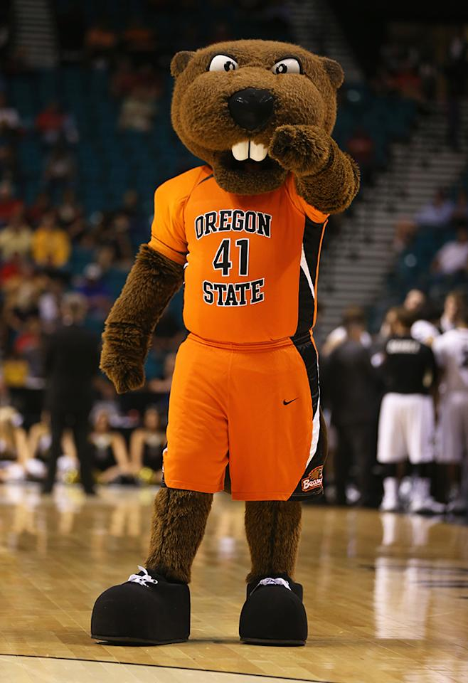 The Oregon State Beavers mascot performs during the first round of the Pac 12 Tournament at the MGM Grand Garden Arena on March 13, 2013 in Las Vegas, Nevada.  (Photo by Jeff Gross/Getty Images)