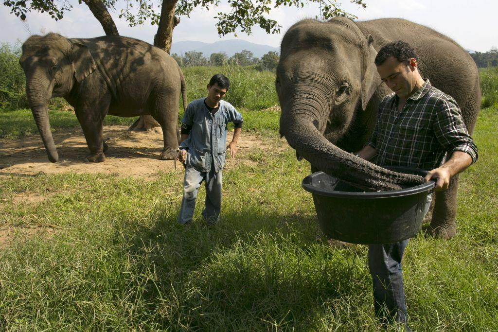 Black Ivory Coffee founder Blake Dinkin (R) feeds an elephant a coffee bean mixture at an elephant camp at the Anantara Golden Triangle resort in Golden Triangle, northern Thailand. It takes 33 kilograms of raw coffee cherries to produce 1 kilo of Black Ivory Coffee.