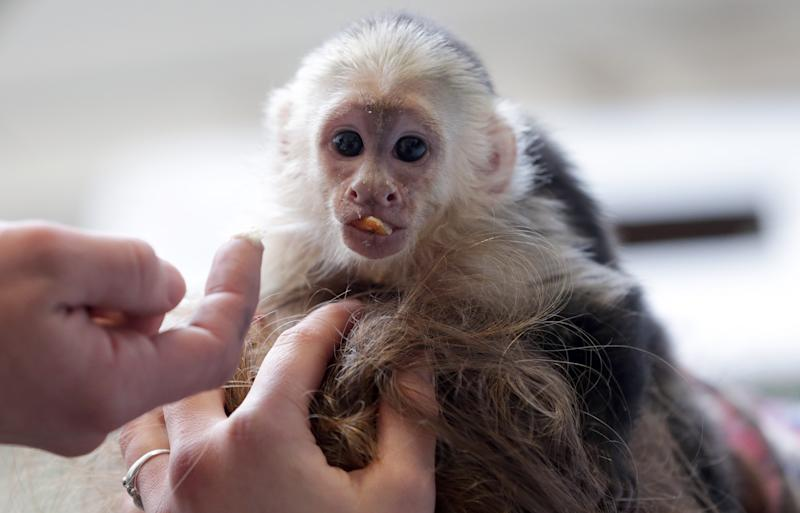 Bieber will have to pay for German monkey business
