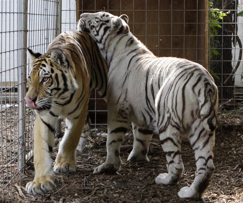 Federal judge upholds Ohio's new exotic animal law