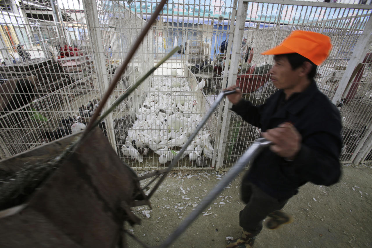 In this April 3, 2013 photo, a worker pushes a cart as live pigeons are sold at a cage at a poultry wholesale market in Shanghai China. China announced a sixth death from the new bird flu H7N9 strain Friday, while authorities in Shanghai halted the sale of live fowl and slaughtered all poultry at a market where the virus was detected in pigeons being sold for meat. The first cases were announced Sunday. (AP Photo/Eugene Hoshiko)