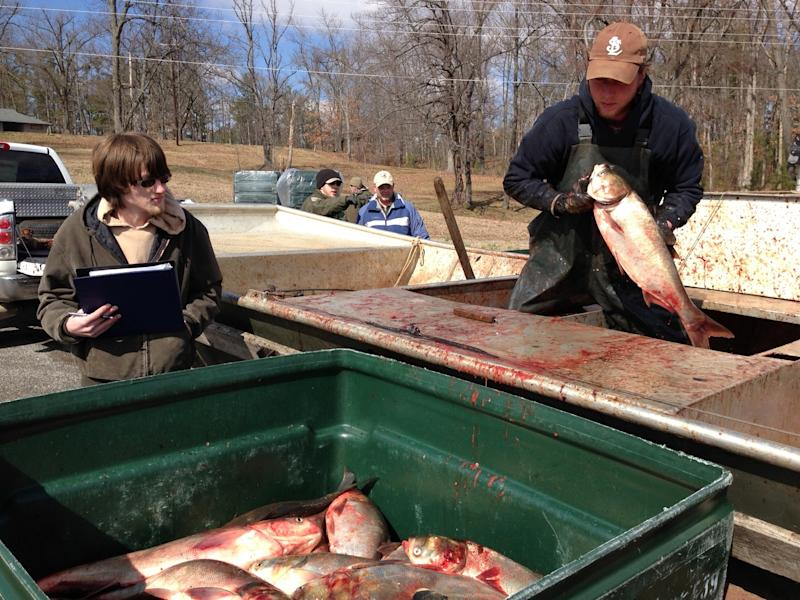 Fishing teams hunt problem fish in Ky. lakes