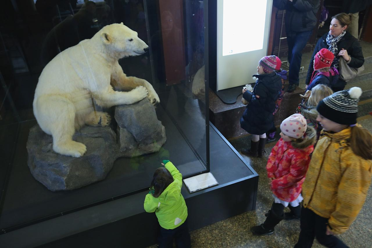 BERLIN, GERMANY - FEBRUARY 16:  Children look at a model of Knut the polar bear, that features Knut's original fur, on the first day it was displayed to the public at the Natural History Museum on February 16, 2013 in Berlin, Germany. Though Knut, the world-famous polar bear from the Berlin zoo abandoned by his mother and ultimately immortalized as a cartoon film character, stuffed toys, and more temporarily as a gummy bear, died two years ago, he will live on additionally as a partially-taxidermied specimen in the museum. Until March 15, the dermoplastic model of the bear will be on display before it joins the museum's archive, though visitors can see it once again as part of a permanent exhibition that begins in 2014.  (Photo by Sean Gallup/Getty Images)