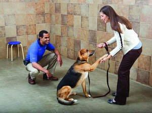 Life Lessons for Dogs and Pet Parents
