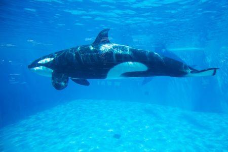 Killer whale shows banned in California because of new law