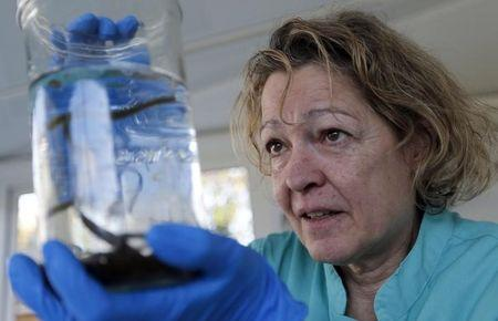 Brigitte Latrille, triple medallist and Olympic champion of fencing in 1980 and one of the four specialists in the world to raise leeches for plastic and reconstructive surgery, holds a jar with leeches as she poses in the laboratory of the Ricarimpex company in Eysines, Southwestern France, December 5, 2016. REUTERS/Regis Duvignau