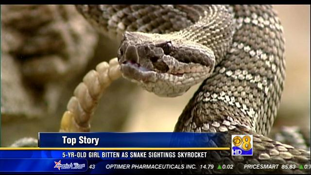 5-year-old bitten by rattlesnake