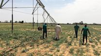 Fighting Terrorism Through Farming in Nigeria