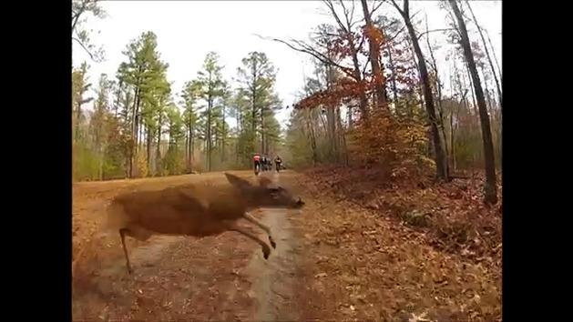 Mountain biker v deer
