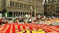 Carpet of flowers transforms Belgium square