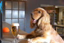 Brewery gives employees 'puppy parental leave' and everyone else major job envy