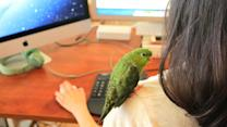 Bring Your Parakeet to Work