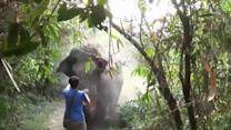 Thailand Man Appears To Stop A Charging Elephant With His Hand