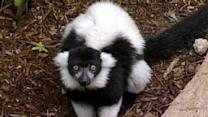 Expedition Madagascar Opens At Zoo