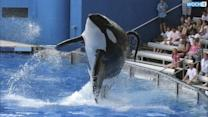 "'Blackfish' Director Talks SeaWorld Revenue Drop: ""People Are Truly Willing To Change Ethically"""