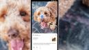 Google Lens va débarquer dans l'appareil photo de votre smartphone