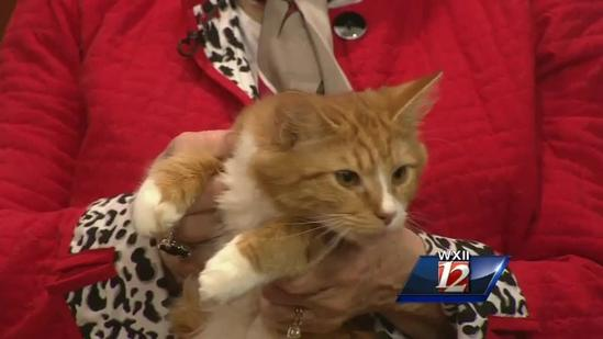 Pet Of The Week: Michael