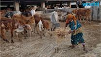 After Beef Ban, Hindu Groups Force Indian Abattoirs to Close