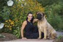 Snakebit! Bullmastiff heals, heads to Westminster Dog Show